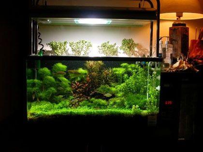 客厅鱼缸摆放风水:这样布置靠不靠得住?