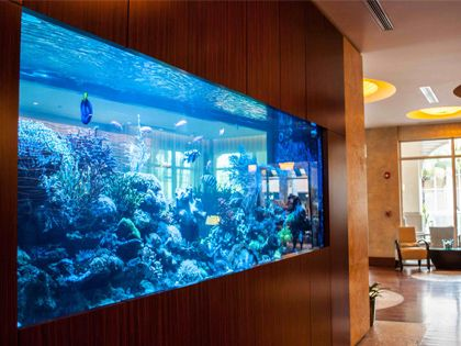 辦公室魚缸擺放風水,提高財運事業運