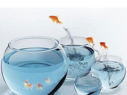 办公室养鱼风水10大注意事项,杜绝触犯禁忌