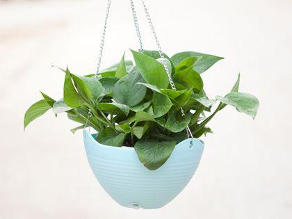 适合室内养的植物 点缀空间装饰