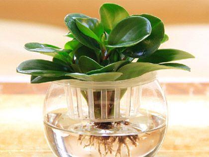 卫生间植物 选择合适好处多