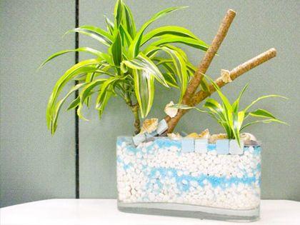 办公室防辐射植物 一举两得心情好
