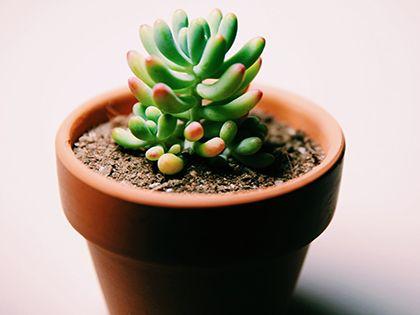 """多肉植物怎么养:""""小萌物""""需要精心呵护"""