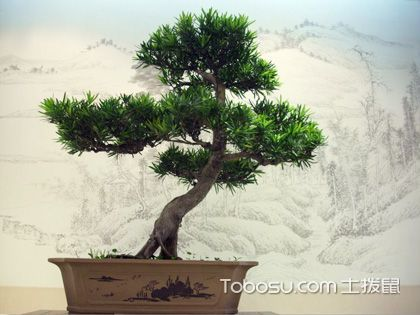 室内盆景植物:打造绿色诗意的居家生活