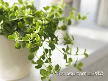 书房放什么植物好 9种不宜置于书房的植物