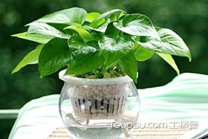 净化空气的室内植物有哪些?这些植物孕妇都可接近