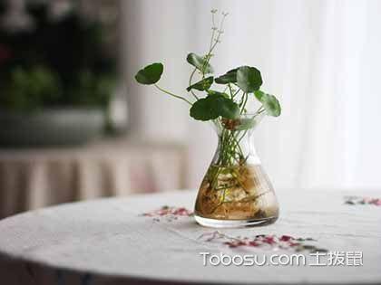 水培植物怎么养?为家居装饰添活力