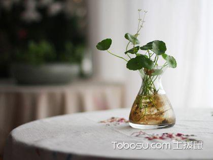 家居植物怎么选 好养?好看?好运气?