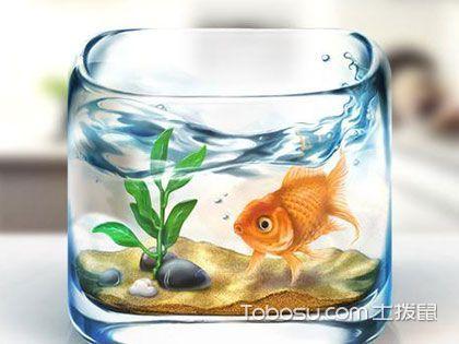 鱼缸的摆放风水有讲究,不宜摆放于沙发后面