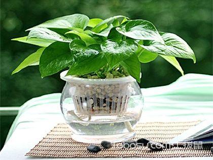 風水植物有哪些?各種類作用不同