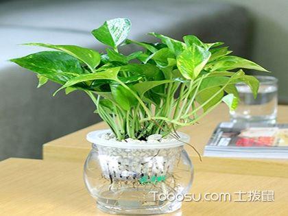 办公室风水植物 若何化解倒霉情形