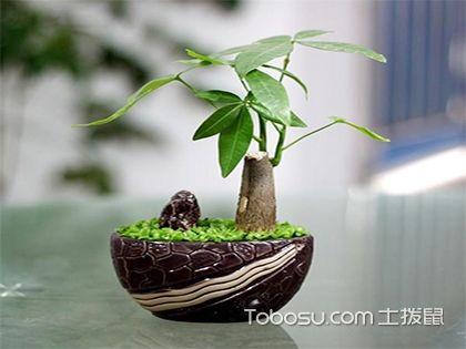 卧室放什么植物风水好?花香清甜不一定适合