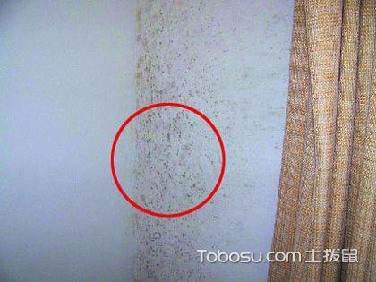 油漆起污斑、墙面发霉变色 找准原因正确处理