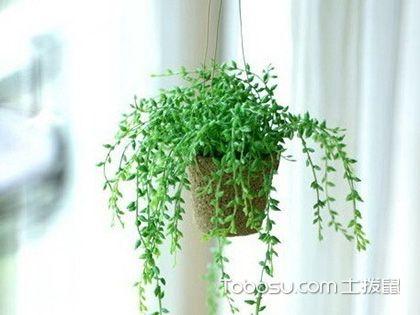 家居植物装饰要遵循什么原则?