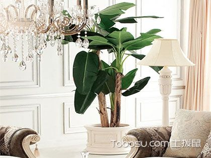 室内植物装饰法则一,色彩搭配有门道