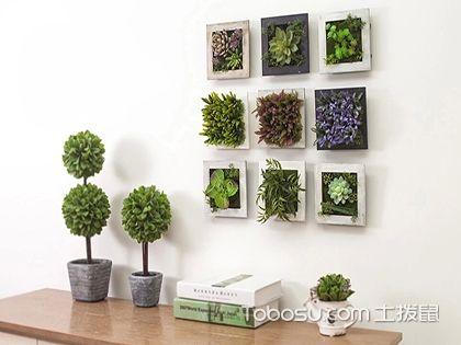 室内植物装饰法则三,把植...