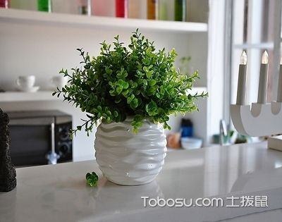 家居空间绿植设计,4招教你美化家的环境