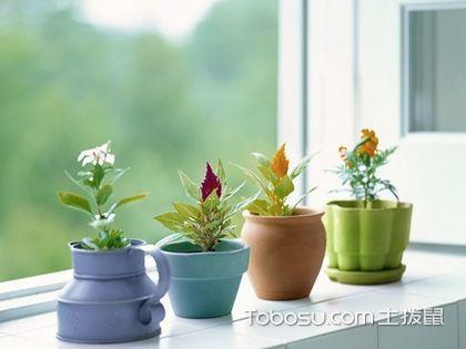 家居常用绿植花卉的选购技巧