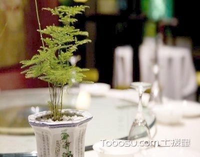 餐厅绿植布置技巧,让你食欲大增停不下来