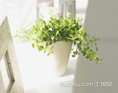 室内绿植布置大全:哪些适合摆放?哪些不适合?