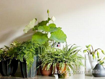简约家居的植物摆放技巧