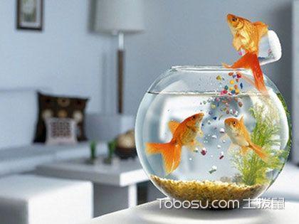 """办公室鱼缸风水图解,让你的事业""""如鱼得水"""""""
