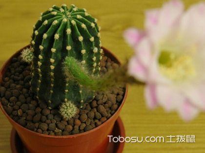 室内植物装饰法则四,形态为家居增色