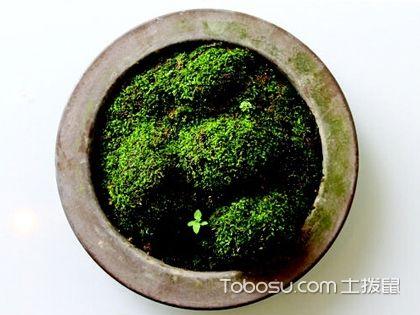 日式风格家居植物布置,形态美学的胜利