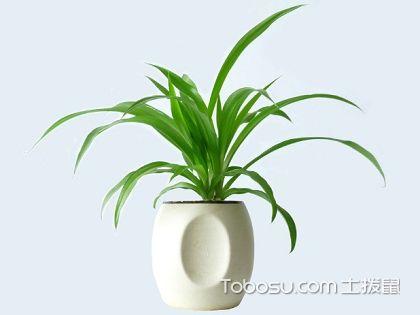 公司与办公室风水植物,升职加薪的小帮手