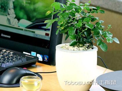 书房植物摆放,这6种旺气植物你一定要知道