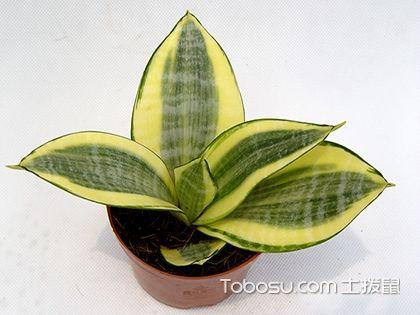 室内植物图片及名称,盘点哪些是我们常见的