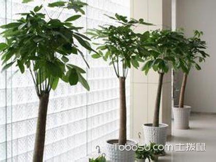 家有发财树,会养是关键的一步