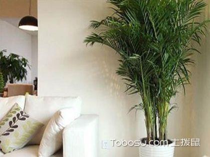 客厅风水植物有哪些?这6种植物都可以