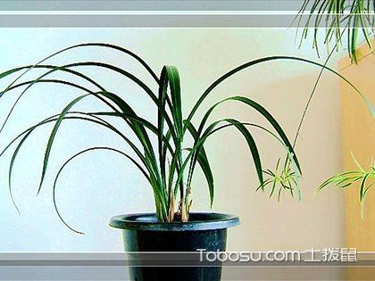 掌握銀邊吊蘭的養殖方法,凈化空氣就這么簡單
