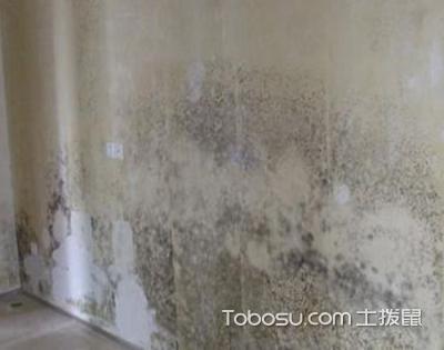 石膏砌墙隔墙发霉怎么办?巧用方法不马虎!