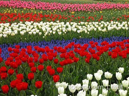 玻璃花瓶适合养哪些花,玫瑰花可以给你想要的浪漫