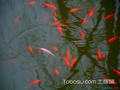 庭院鱼池风水布局,不宜太深!