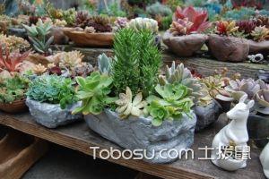 多肉植物花盆