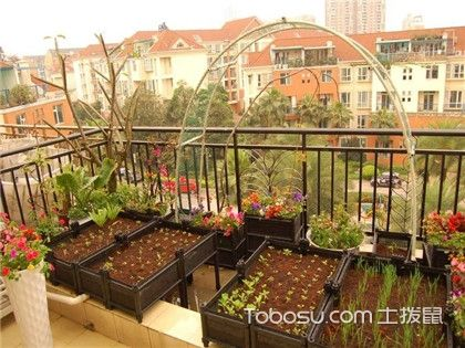 阳台种菜攻略,根据阳台朝向选择菜种