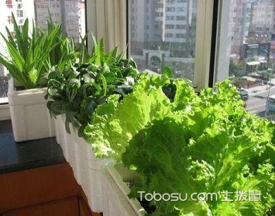 阳台种菜用什么土最好?用这种土种菜新鲜又营养!