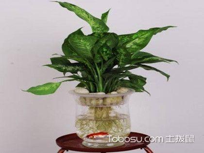 水培植物怎么养  七招教你养好植物