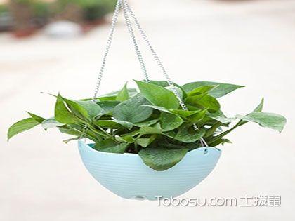 哪些植物可以做室内植物?以下5款最合适