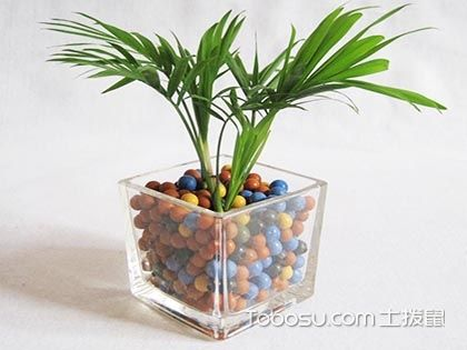 袖珍椰子有毒吗?可以养殖在卧室吗?