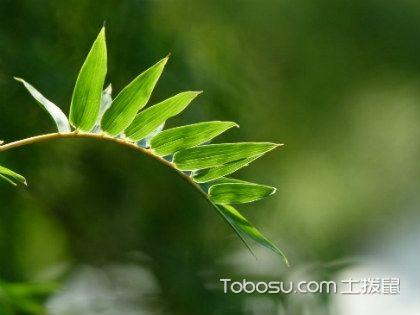 凤尾竹的养殖方法和注意事项,温暖气候最佳