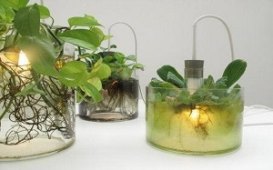 【植物灯】植物灯具,植物灯有用吗,使用,图片