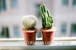 防辐射植物