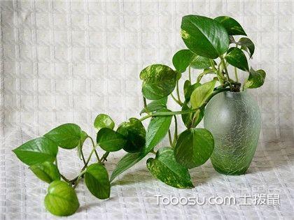 绿色植物有哪些?不知道的看过来!