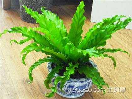 绿色植物的好处,你需要了解的5大益处!