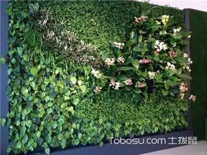 绿色植物有什么作用?4步带你了解!
