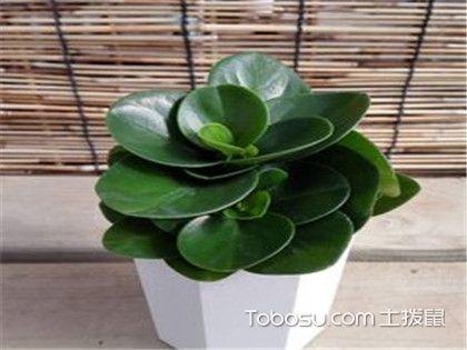 卧室绿色植物风水,摆放时需注意的事项!
